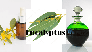 Eucalyptus : Antibiotique et antiseptique de la nature et bien plus encore