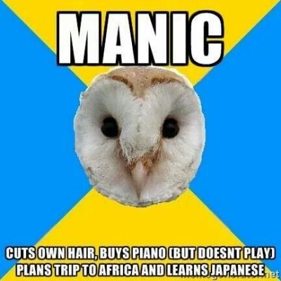 bipolar owl manic meme