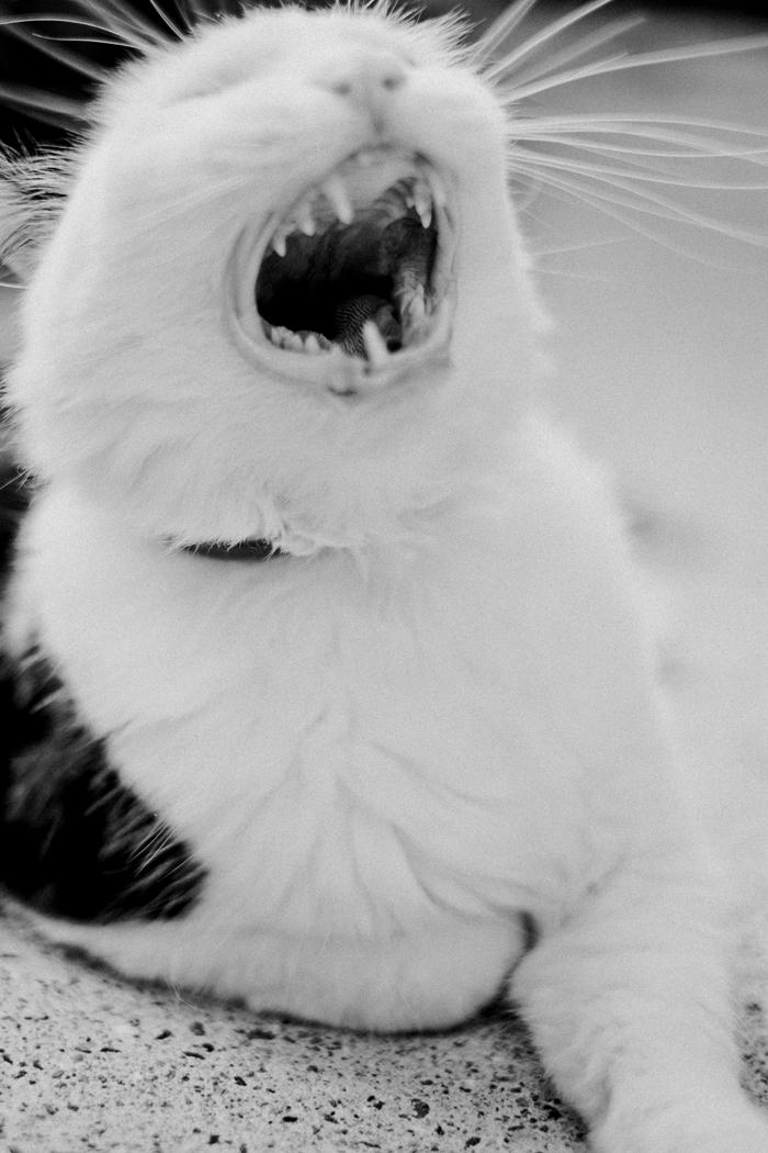 gremlin yawning