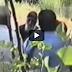 ΑΥΤΟ είναι το πιο σπάνιο βίντεο του Αγίου Παισίου