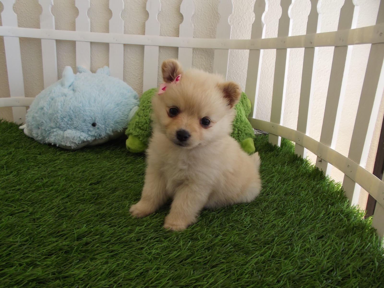 Cute Puppies HD Wallpapers