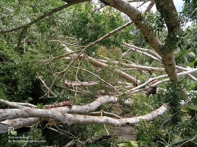 Berturut-turut, Dalam Dua Hari Resan Beringin Pelindung Mata Air Di Gubugrubuh Getas Rungkat