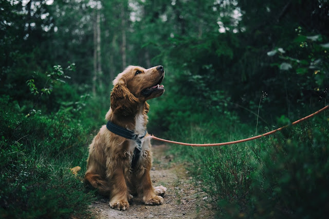 The Positive Effects Of Spending Time With Dogs | I Spent Time With A Roomful Of Dogs And Left Floating On A Cloud | Dogs For Better Mental Health