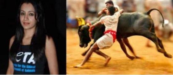 ஜல்லிகட்டை தொடர்ந்து எதிர்ப்பேன் – நடிகை த்ரிஷா ஆவேசம்
