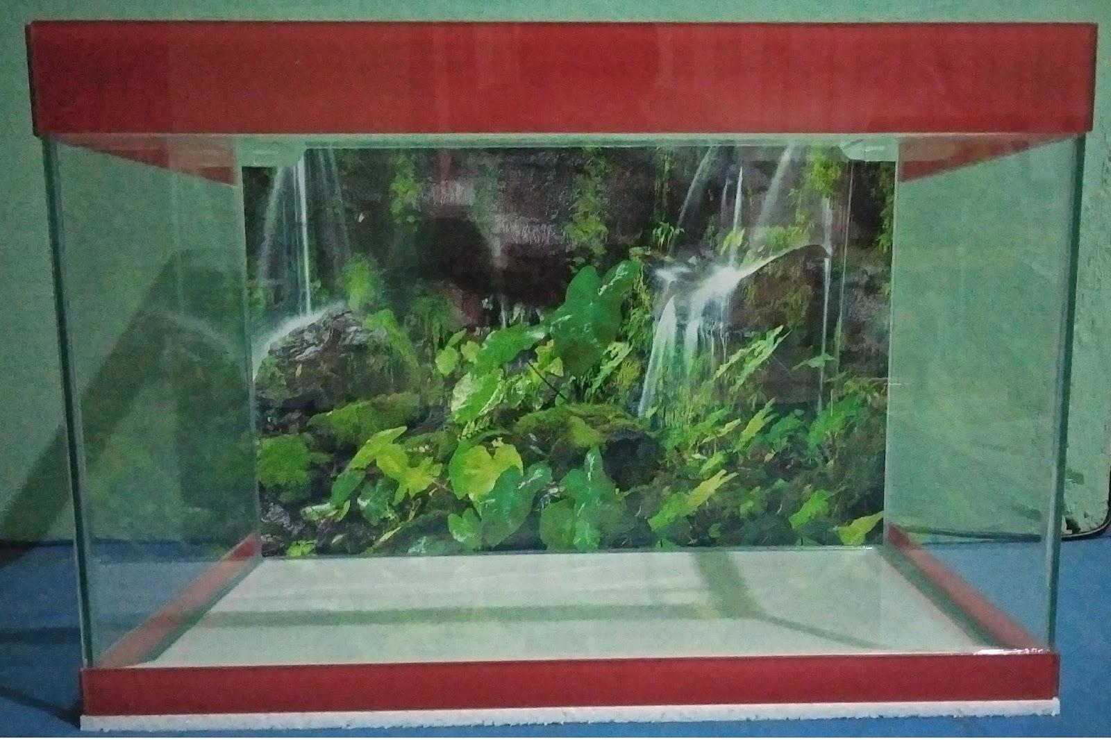 Download 5500 Koleksi Background Aquarium Jogja HD Gratis