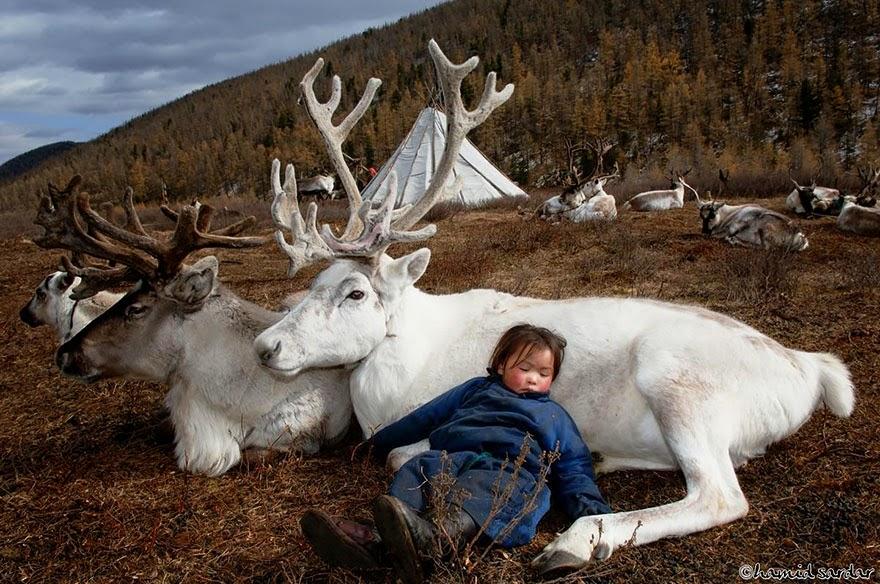 reindeer people Dukha people Hamid Sardar-Afkhami