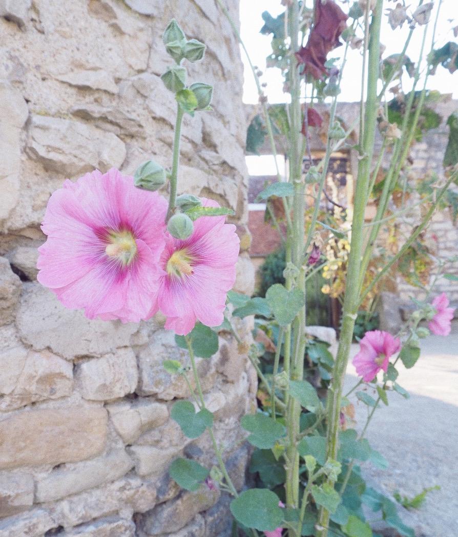 fleurs vezelay bourgogne