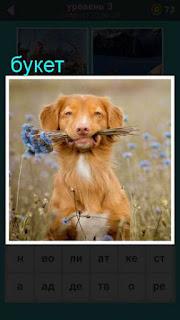 собака в зубах держит букет цветом находясь в поле 667 слов 3 уровень