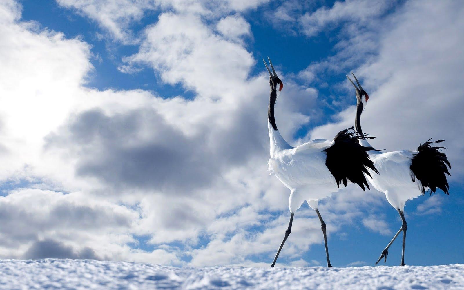 Winter Awesome Birds HD Love Wallpaper