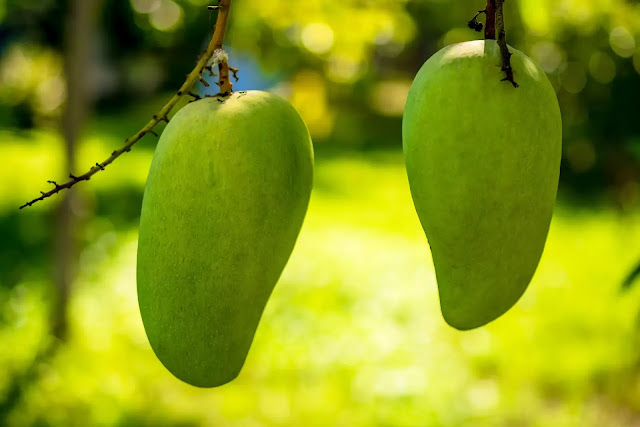 Mango Fruits helps  problem of dehydration in summer