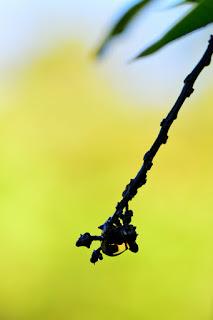 Mango Tree Abstract