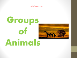Groups of Animals