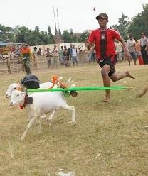 Vocabulary Exercise - Animal Races in SEMIPRO Festival Descriptive Text