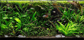 BIOTOPE STYLE