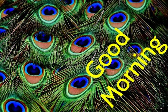 vGood Morning