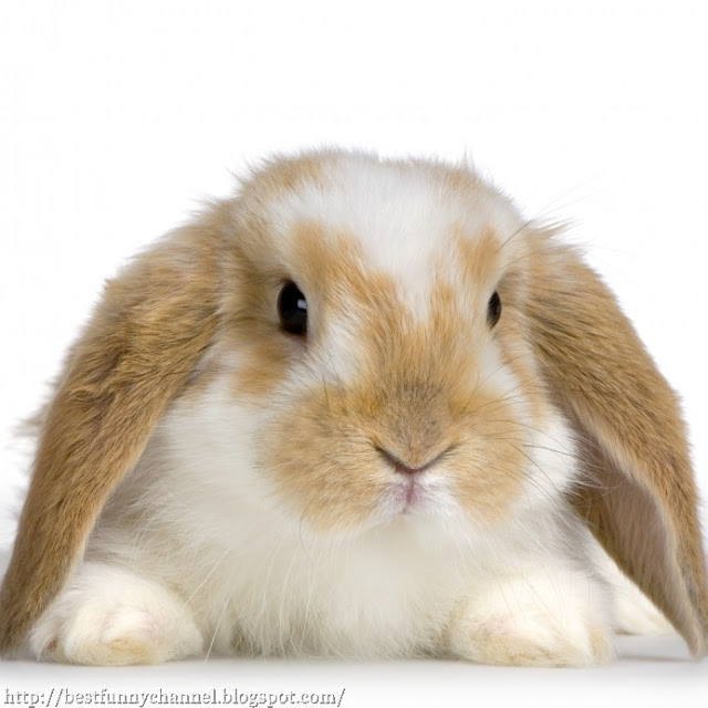 The nice-looking rabbit