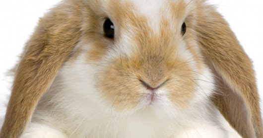 Cute and funny pictures of animals  Bunny.