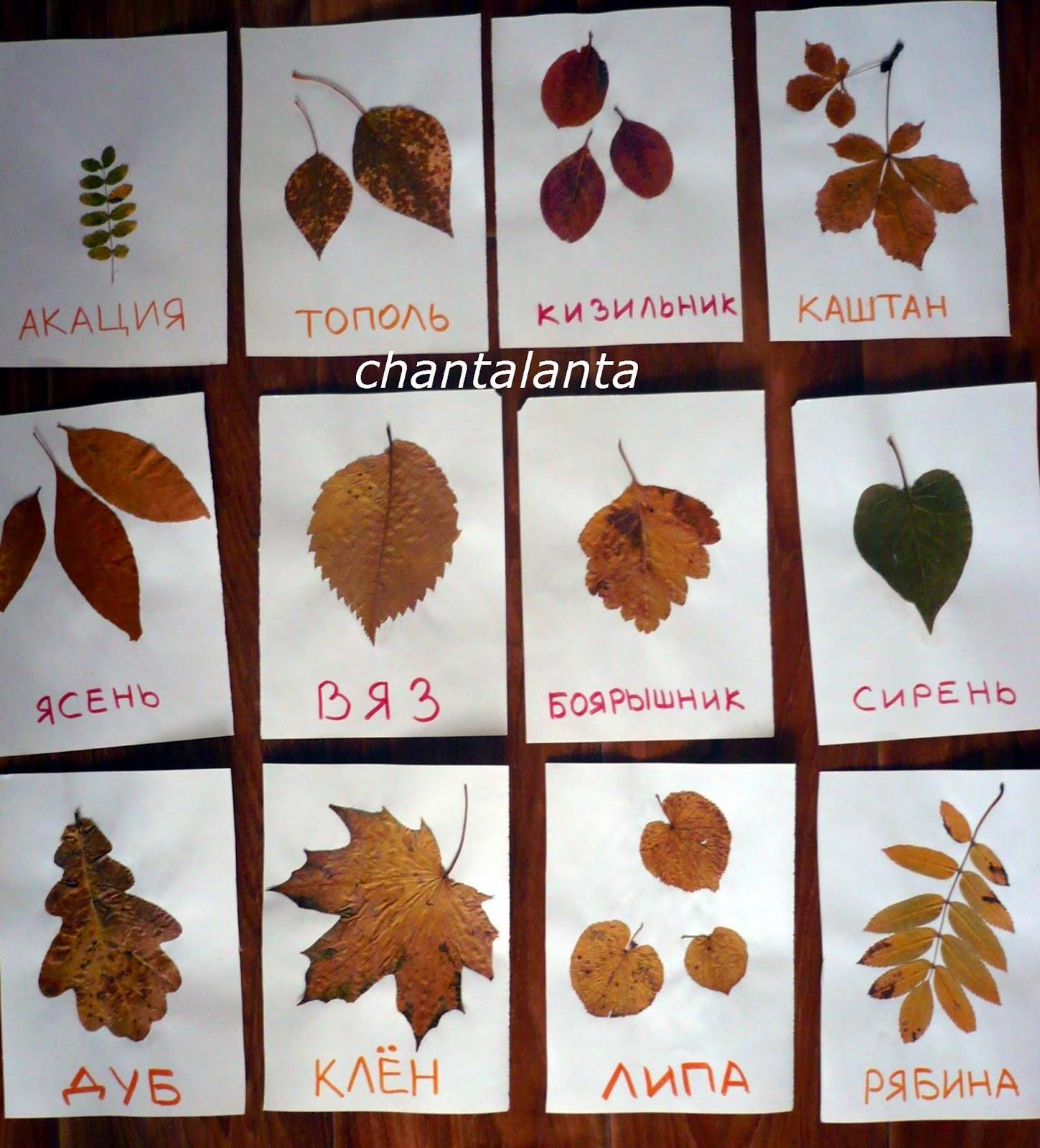 Картинки листьев деревьев и названия