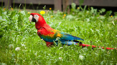 nice-parrot-images-hd