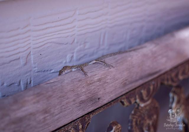 Lizard (©Jenny Bell @ Flutterbye Chronicles)