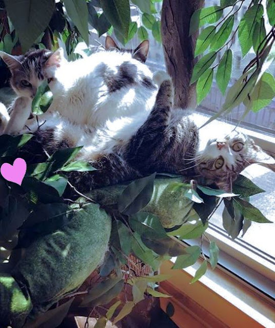 Large Pet Tree for Multiple Cats