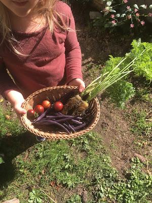 cueillette d'automne, haricot, tomate, carotte