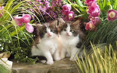 cat-kitten-sitting-in-garden-pics