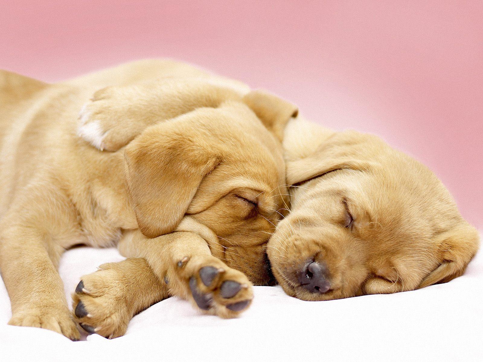 Cute Sleeping Puppies Wallpapers Bestwall
