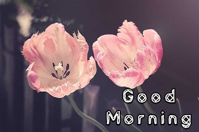 Good Morning Images Flowers