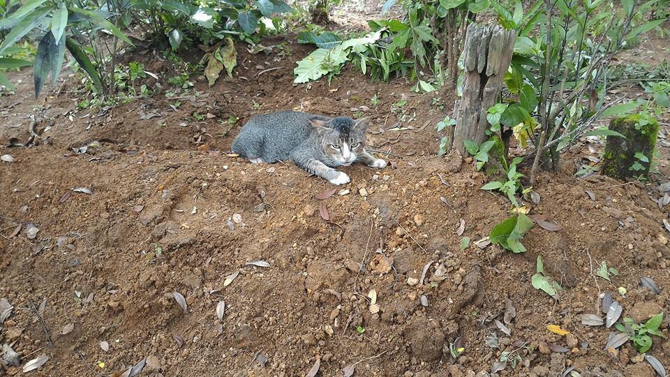 Mengharukan! Kucing Ini Rela Tinggal di Kuburan Untuk Menemani Mayat Majikannya
