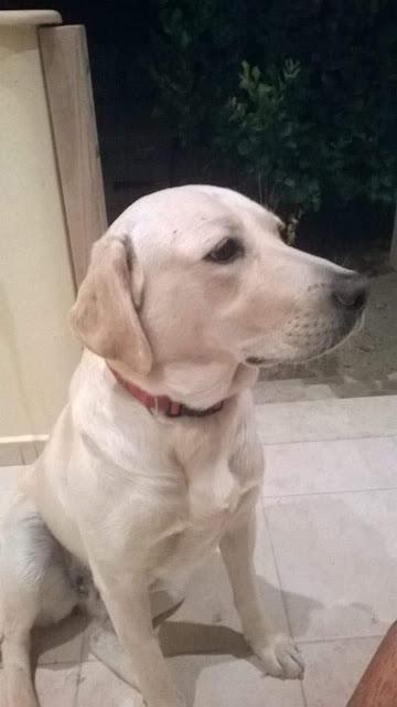 Ραβέλ και Μυρτώ οι πρώτοι σκύλοι-Μουσειοπαιδαγωγοί σε Μουσείο στην Ελλάδα