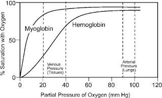 Partial Pressure of Oxygen