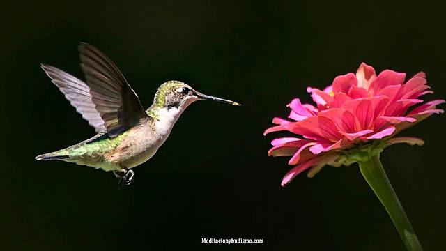 Leyenda del colibrí que puede cambiar tu percepción de la vida y la muerte