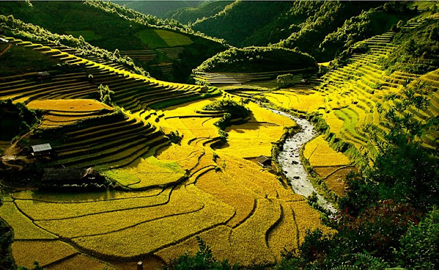Top 5 sites of ripe rice hunting can't be missed at Mu Cang Chai 1