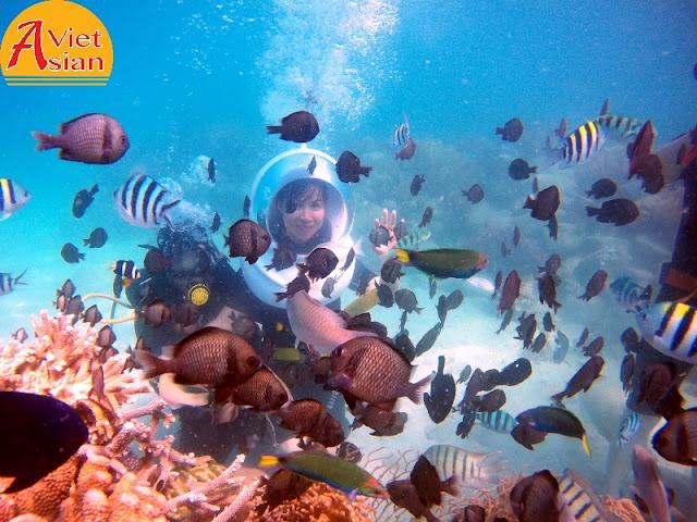 Tour Đi Bộ Dưới Biển kết hợp tour 4 đảo 8
