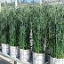 Jätevesilietteen pitkäaikaisesta fosforilannoitusvaikutuksesta ja käyttöön liittyvistä riskeistä uutta tutkimustietoa