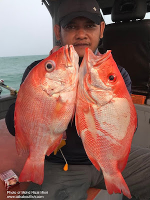 Malabar Blood Snapper
