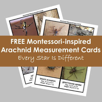 FREE Montessori-inspired Arachnid Measurement Cards