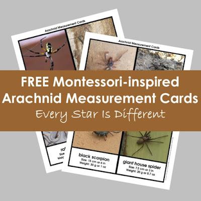 FREE Montessori-inspired Arachnid Measurement Cards