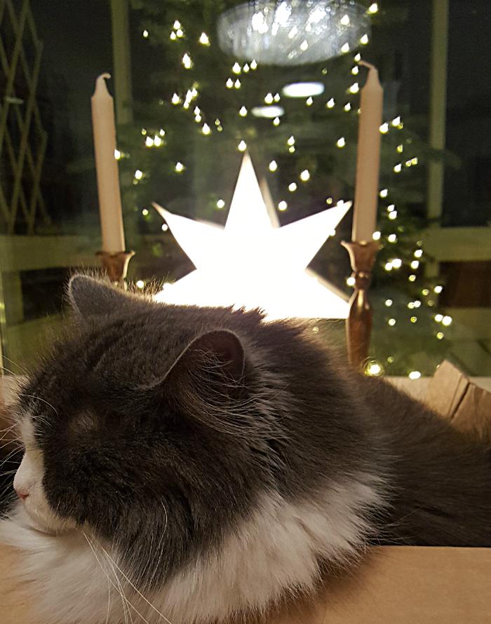 kissa laatikossa jouluna