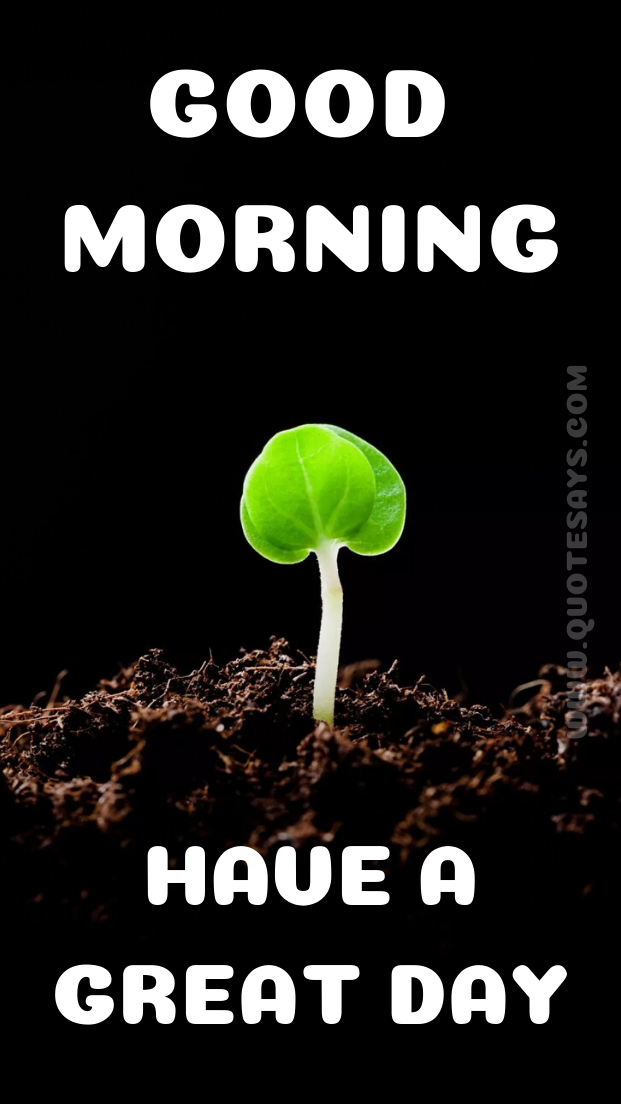 Beautiful Good Morning Little Plant