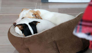 Two puppies squashed together in a tiny bed