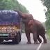Ο άτακτος ελέφαντας...