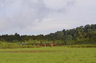 savanna sembalun