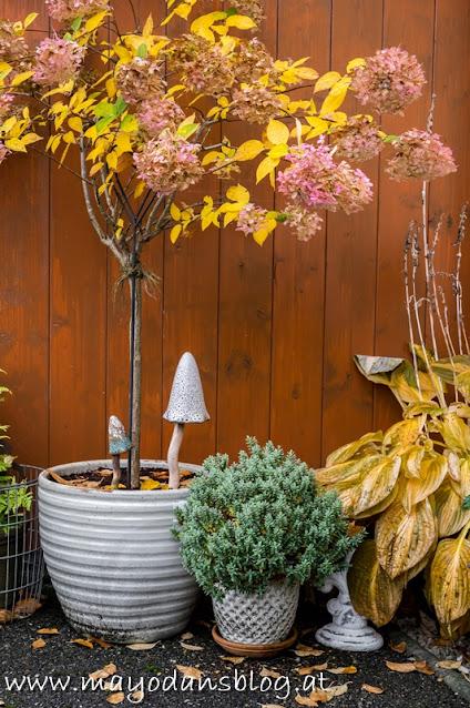 Topfpflanzen im Herbstkleid