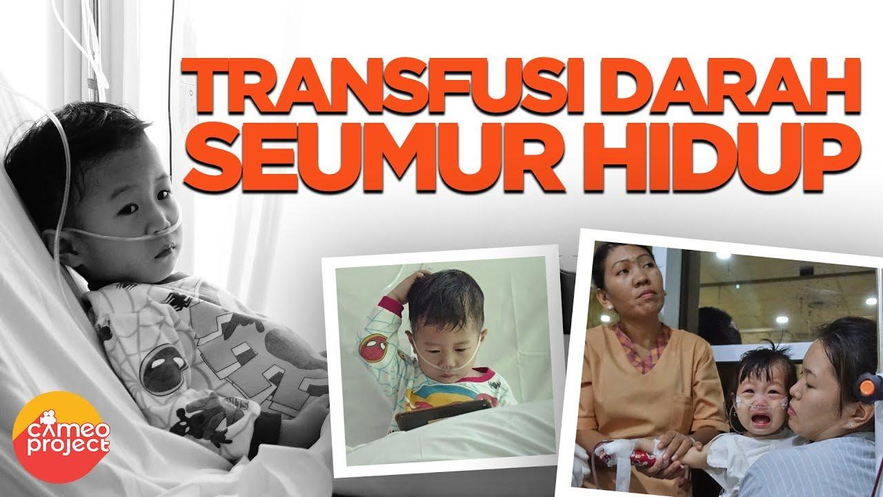 Mengatasi Thalassemia Dengan Nutrisi