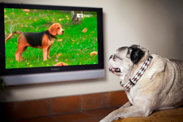 """Discovery traz para o Brasil """"DOGTV"""", primeiro canal desenvolvido especialmente para cães"""