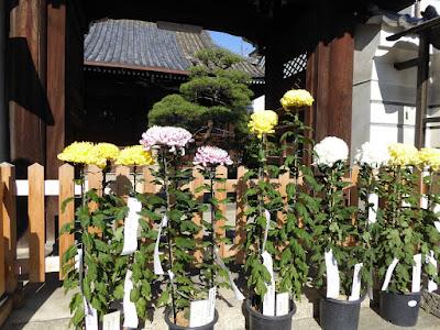 松風山(しょうふうざん)浄念寺 街道菊花祭