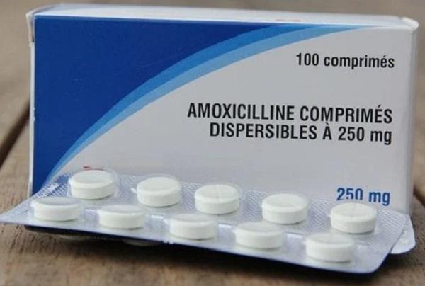 Manfaat Amoxicilin Untuk Ayam Aduan
