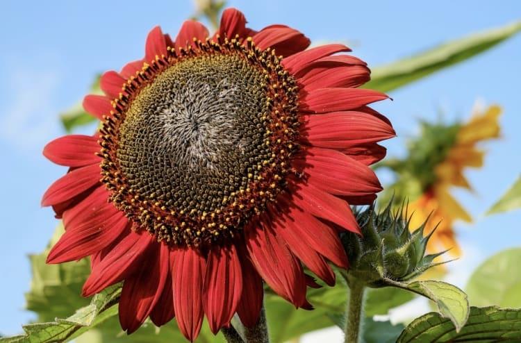 Que Tipos De Flores Rojas Existen Dupalu News